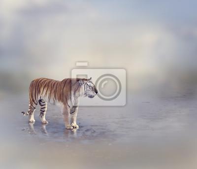 Tiger in der Nähe von Wasser