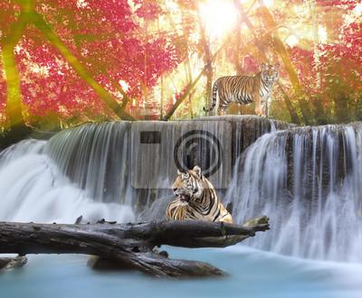 Tiger in der Wasserwand