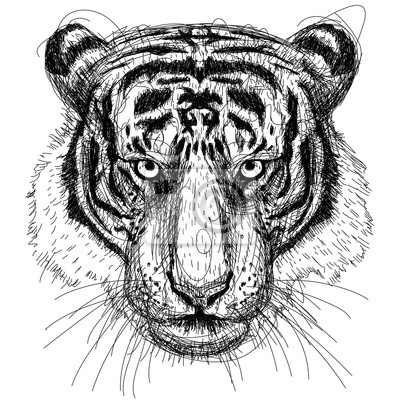 Tiger-Kopf