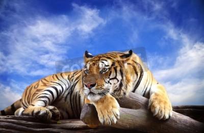 Fototapete Tiger mit blauem Himmel