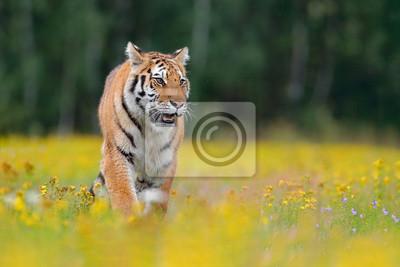 Fototapete Tiger Mit Gelben Blumen Sibirischer Tiger Im Schönen Lebensraum