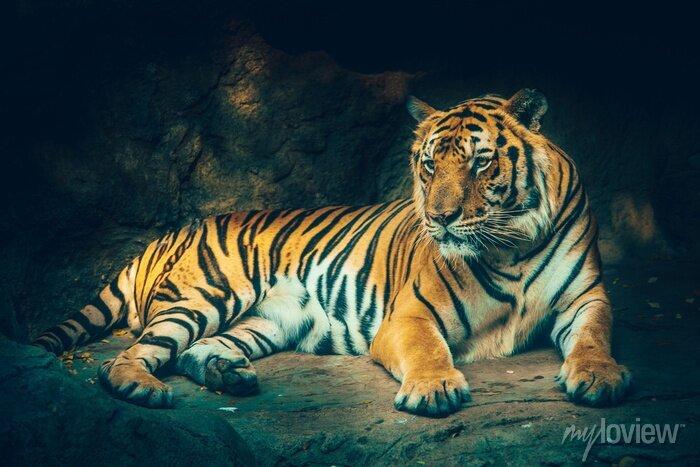 Fototapete Tiger mit Stein Berg Hintergrund in dunklen grimmig majestätischen gefährlich, erschreckend Gefühl Farbeffekt.