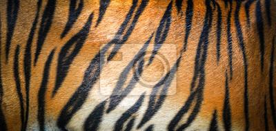 Fototapete Tiger pattern background / real texture tiger black orange stripe pattern bengal tiger