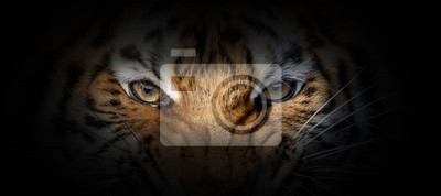 Fototapete Tiger portrait on a black background