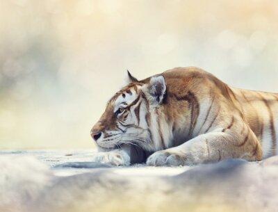 Tiger ruht auf einem Felsen