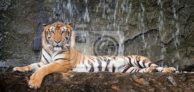 Tiger sitzt in tiefem Wild
