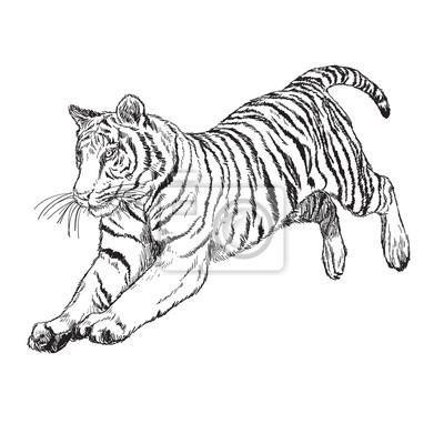 Fototapete Tiger Springen Hand Zeichnen Monochrom Auf Weißem Hintergrund