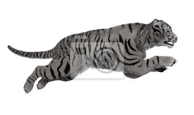tigre blanc qui saute