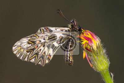 Tiny Schmetterlinge Futterung Auf Kleinen Gelben Und Rosa Bluten