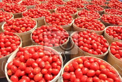 Tomaten Scheffel 2