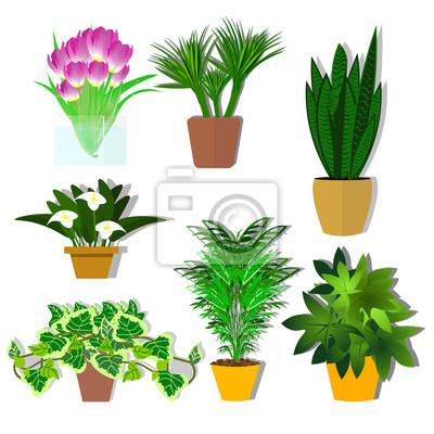 Fototapete Topfpflanzen Vektor. Eine Anlage Für Das Büro. Blumen. Eine  Reihe Von Topfpflanzen