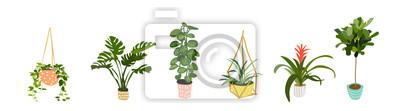 Fototapete Topfpflanzensammlung.  Sukkulenten und Zimmerpflanzen.  Hand gezeichnete Vektorgrafiken.  Satz Hausinnenpflanzenvektor-Cartoon-Gekritzel.