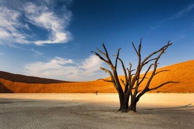 Fototapete Toter Baum in Sossusvlei, in der Namib-Wüste, Namibia