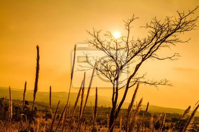 Toter Baum und Feld von Gras bei Sonnenschein