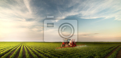 Fototapete Tractor spraying pesticides at  soy bean field