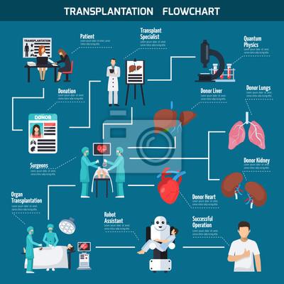 Transplantation Flowchart Layout Fototapete Fototapeten Spender
