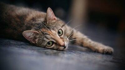 Fototapete Traurige gestreifte Katze mit weißen Schnurrbärten