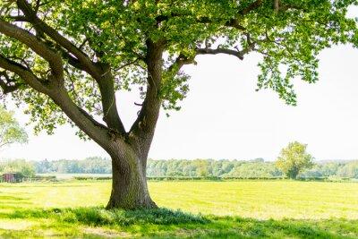 Fototapete tree
