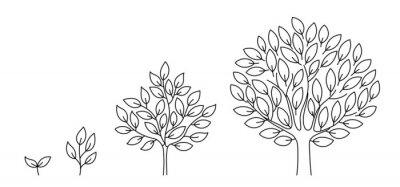 Fototapete Tree growth stages. Seedling development stage. Animation progression. Business cycle development infographic. Vector contour line. Open paths. Editable stroke. Plant life process.