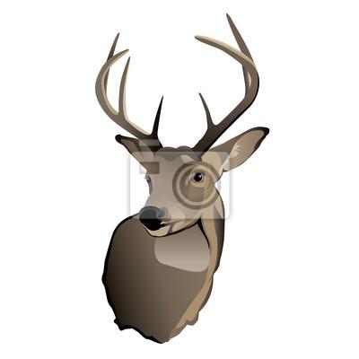 Trophy Weißwedelhirsch Buck
