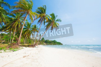 Fototapete tropical beach with coconut palm and sea