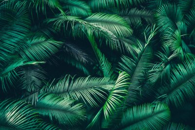 Fototapete tropical forest natural background, nature scene in green tone style