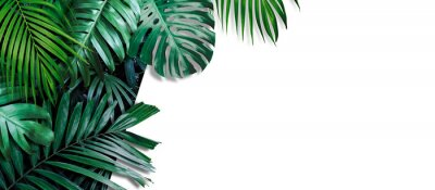 Fototapete Tropical leaves banner on white background with copy space