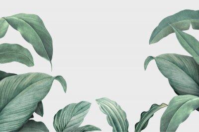 Fototapete Tropical leaves frame