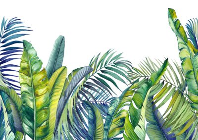 Fototapete Tropical palm and banana leaves. Jungle wallpaper. Isolated watercolor background.