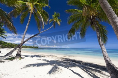 Fototapete Tropical paradise on Fiji island