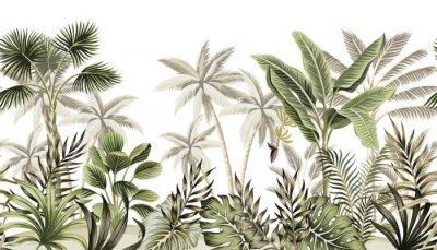 Fototapete Tropical vintage botanical landscape, palm tree, banana tree, plant floral seamless border white background. Exotic green jungle wallpaper.