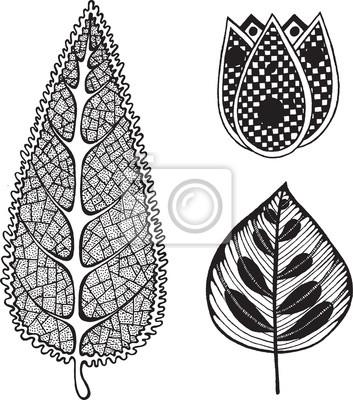 Tropische Exotische Blatt Und Blumensammlung Ausmalbilder