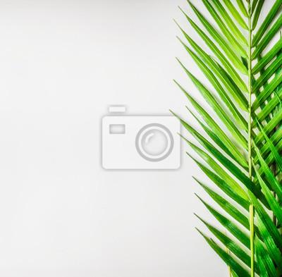 Tropische Palmblätter Auf Weißem Schreibtischhintergrund Draufsicht