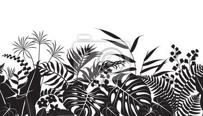 Hauspflanzen Mit Ungewohnlichen Blattern Plantura 11