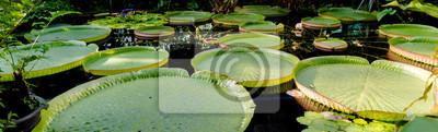 Tropische riesen Seerose