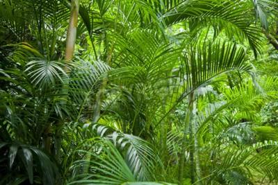 Fototapete Tropische üppigen grünen Palmen Dschungel Hintergrund