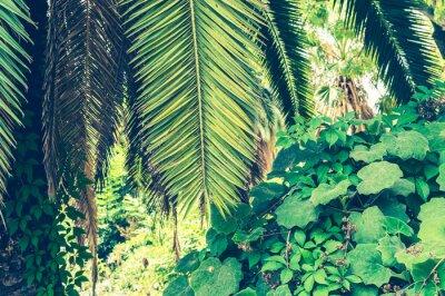Fototapete Tropischer Hintergrund von Palmblättern