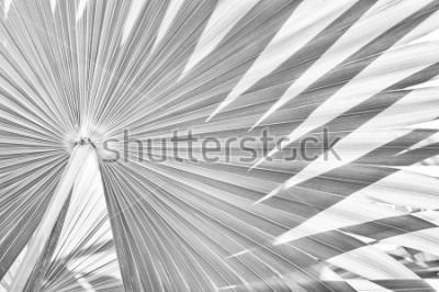 Fototapete tropischer Palmenlaubbeschaffenheitshintergrund, Zusammenfassung gestreift von der Natur, Schwarzweiss-Ton
