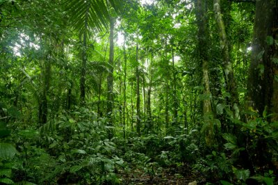 Fototapete Tropischer Regenwald-Landschaft, Amazon