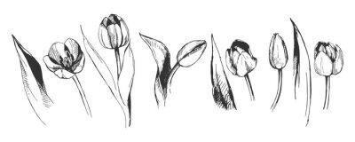 Fototapete tulip flower graphic illustration decorative nature art