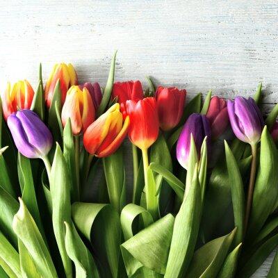 Fototapete Tulipany