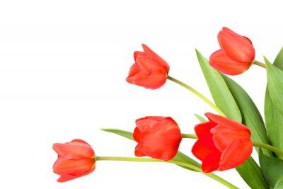 Fototapete Tulpen auf einem weißen Hintergrund