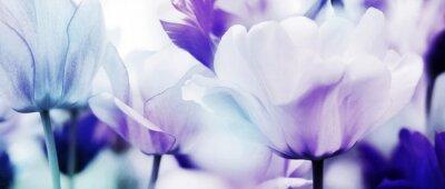 Fototapete Tulpen cyan-blau violett ultraleicht