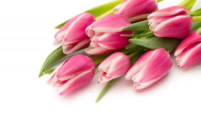 Fototapete Tulpen rosa auf dem weißen Hintergrund.