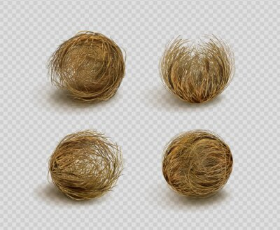 Fototapete Tumbleweed, dry weed ball isolated on transparent background. Vector realistic set of western desert dead plants, rolling dry bushes, old tumble grass in prairie