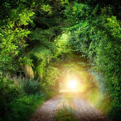 Fototapete Tunnel aus Bäumen führt ins Licht