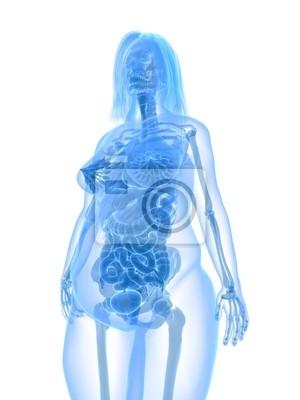 Übergewichtige frau - anatomie fototapete • fototapeten anatomisch ...