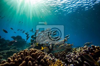 Fototapete unterwasserwelt  Unterwasserwelt mit fischen im hintergrund fototapete • fototapeten ...