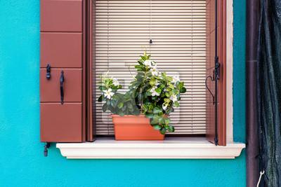 Vase Der Weissen Blumen Auf Fensterbrett Und Blaue Wand In Burano