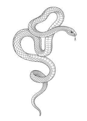 Fototapete Vector Hand Drawn Monochrome Snake